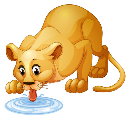 puddle: Lion drinking water from puddle illustration Illustration
