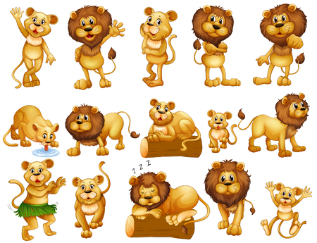 lioness: Lion and lioness in different actions illustration