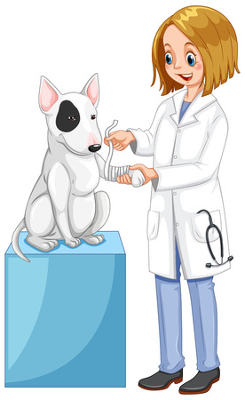 Vet wrapping dog's leg illustration