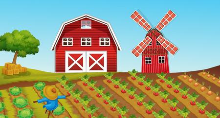 farmland: Farmland with crops on the farm illustration