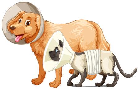 犬と猫のカラー イラスト  イラスト・ベクター素材