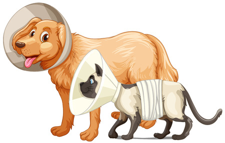 Dog and cat with collars illustration Illustration