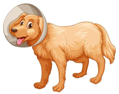 collar: Little dog with collar illustration