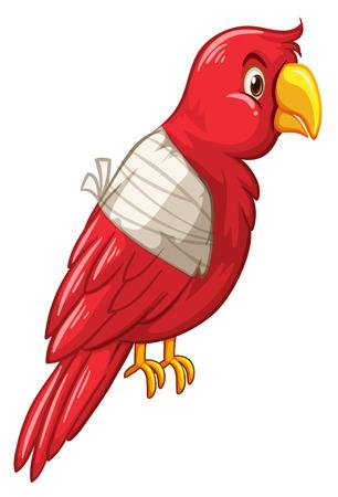 injured: Parrot bird is injured illustration