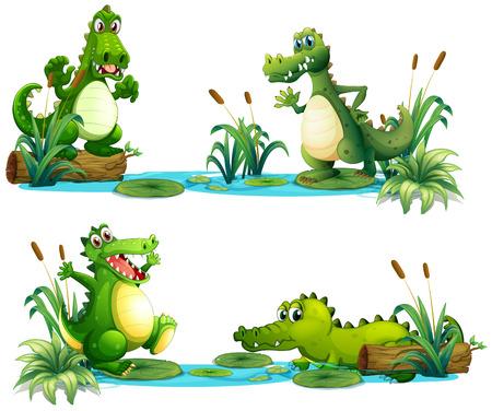 cocodrilo: Cocodrilos que viven en la ilustraci�n de la charca