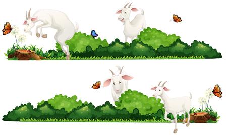 buisson: chèvres blanches dans l'illustration de jardin