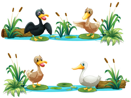 pond water: Ducks living in the pond illustration Illustration
