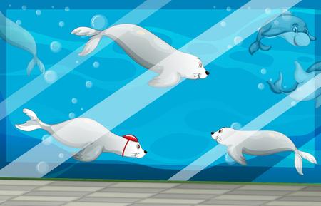 wild living: Seals and dolphins swimming in aquarium illustration Illustration