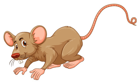 disease carrier: Little mouse with silly face illustration Illustration