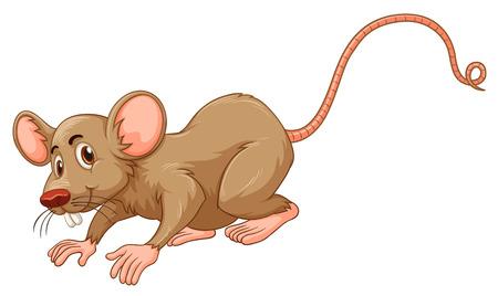 ratones: Pequeño ratón con la ilustración de la cara tonta Vectores