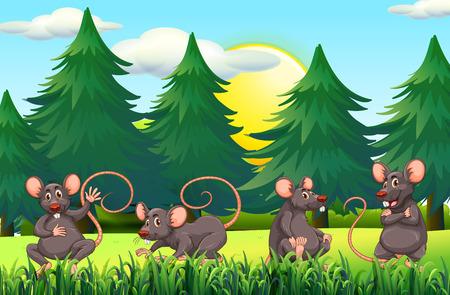 ratones: Cuatro ratas en el campo de la ilustración