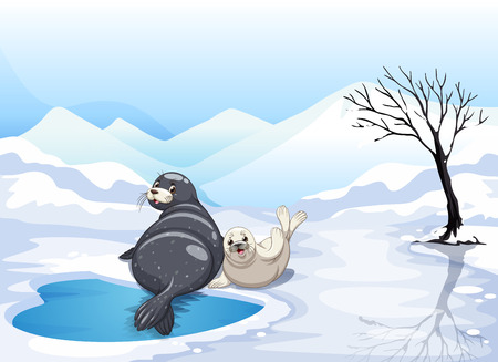 arctic landscape: Two seals sitting on ice illustration
