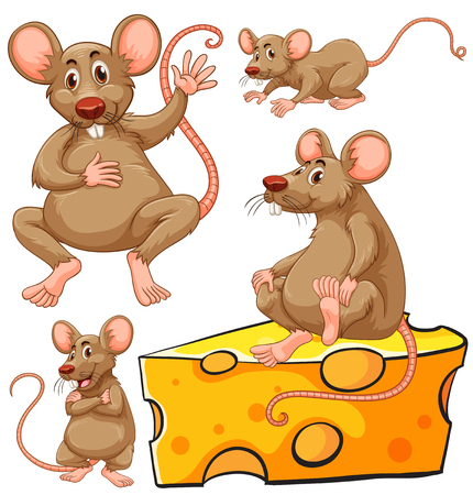 cheese: Brown mouse and cheese slice illustration