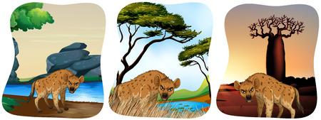 hienas: Hienas en el campo de la ilustración Vectores