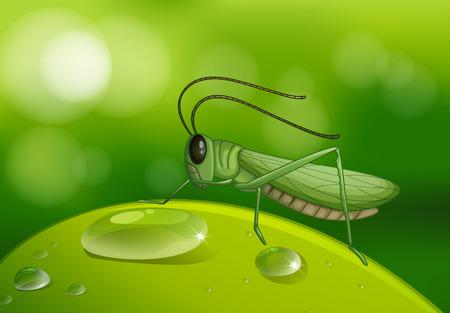 Grasshopper on green leaf illustration Illustration