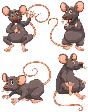 disease carrier: Mouse with gray fur in four actions illustration Illustration