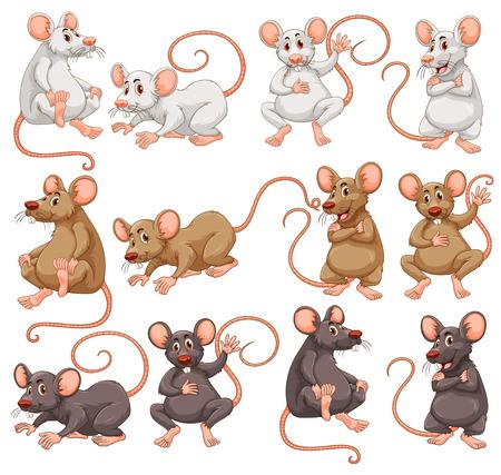 異なる毛皮色図をマウスします。  イラスト・ベクター素材