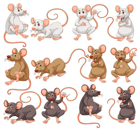 Mouse with different fur color illustration Vectores
