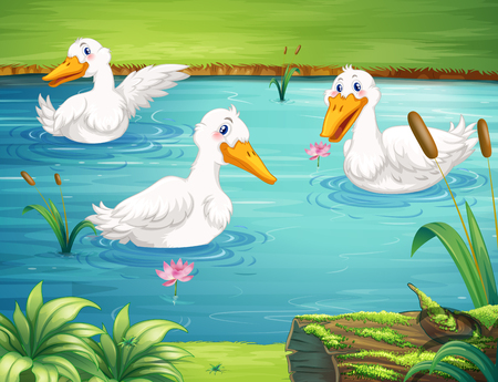 ponds: Three ducks swimming in the pond illustration