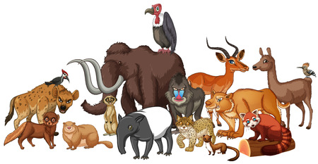animals in the wild: Different kind of wild animals illustration
