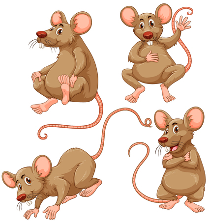 disease carrier: Four brown mouse on white background illustration