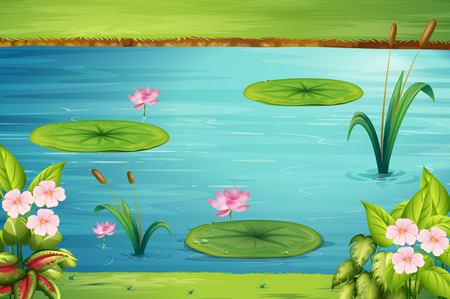 lily pads: Scene with lotus in the pond illustration Illustration