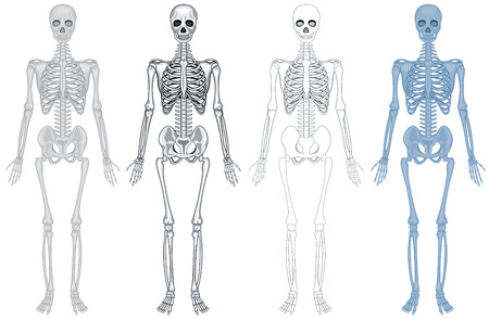 Different diagram of human skeleton illustration Illustration