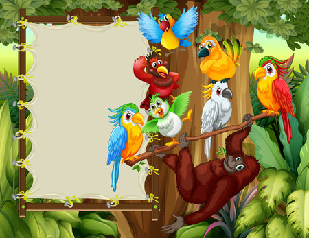 amazon forest: Frame designs with wild birds and monkey illustration