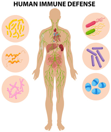 human immune system: Human immune defense diagram illustration