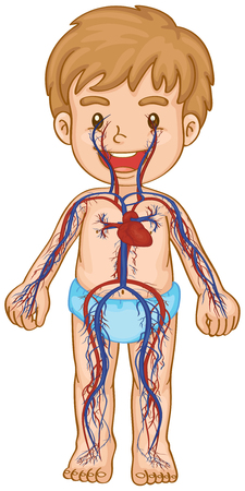 circulatory: Blood system in boy body illustration