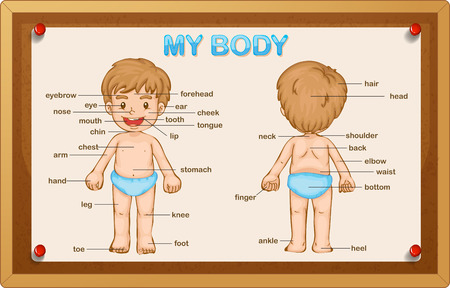 body parts: Littly boy and body parts illustration