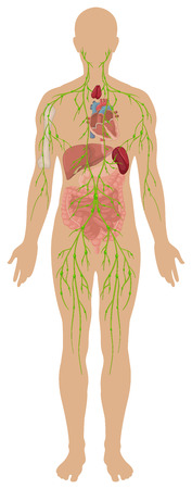 Lymphatic system in human body illustration  イラスト・ベクター素材