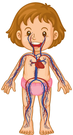 child care: Blood systems in little girl body illustration