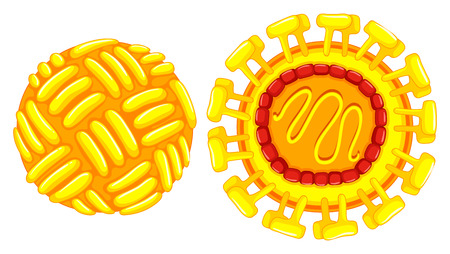 cells: Close up diagram of zika virus  illustration