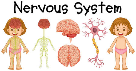Nervous system of little girl illustration Illustration