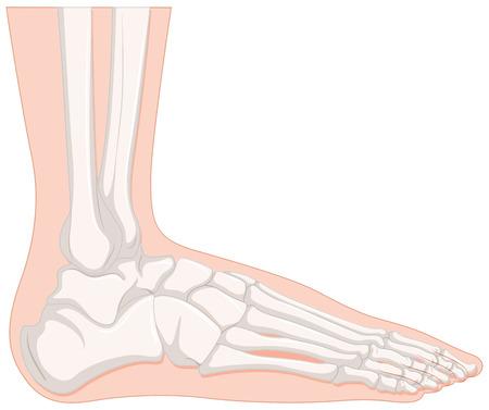 cancer foot: X-ray human foot bone illustration Illustration
