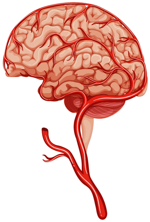 clot: Blood clot in human brain illustration Illustration