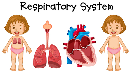 adolescent: Respiratory system in little girl illustration Illustration