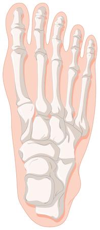 toe: Bone x-ray for gout toe illustration Illustration