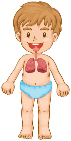 medical student: Respiratory system in human boy illustration