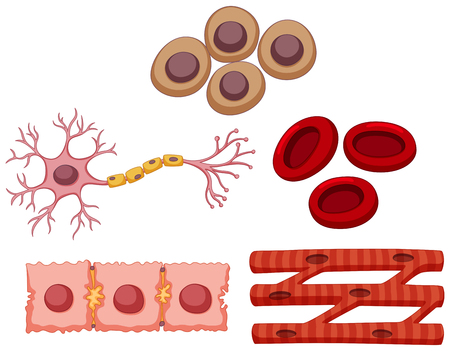 stems: Different type of stem cell illustration Illustration