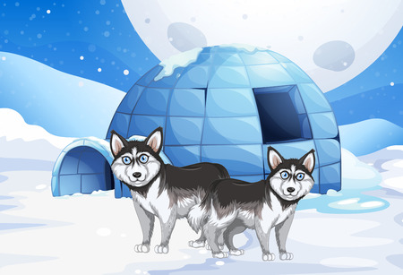 igloo: Syberian dogs and igloo illustration