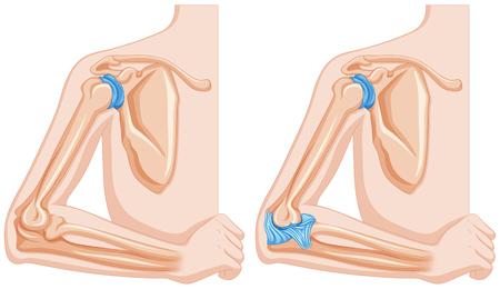 codo: Diagrama que muestra la ilustración articulaciones del codo