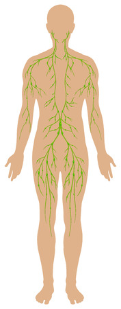 human being: Lymphatic diagram in human being illustration