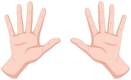 人間の手に白い背景の図