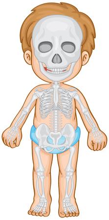 skeletal system: Skeletal system in human boy illustration
