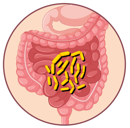 unhealthy living: Bacteria in human stomach illustration Illustration