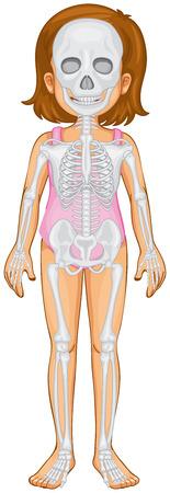 anatomy skeletal: Skeletal system in human girl illustration