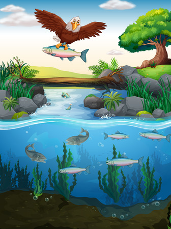 catching: Eagle catching fish in the river illustration