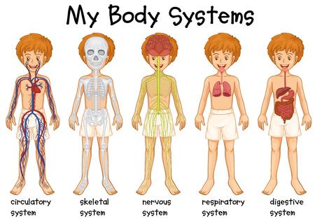 educativo: sistema diferente en la ilustración humana
